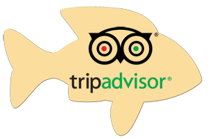 Rate us on Trip Advisor